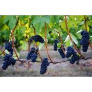 Vinskole for kvinder 6/9: Pinot Noir fra hele verden.-20